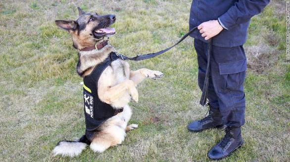 Trung Quốc bán đấu giá chó 'thi rớt' đại học cảnh sát - Ảnh 1.