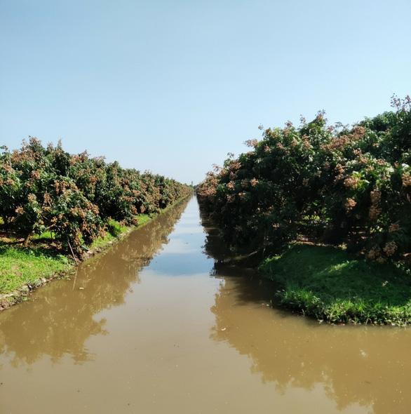 Hàng trăm tấn sữa bò, nhãn của bà con Nông trường Sông Hậu có nguy cơ phải đổ - Ảnh 2.