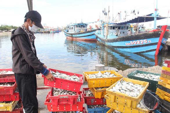 Đóng cửa cảng cá lớn nhất miền Trung, Đà Nẵng vẫn còn hơn 200 tấn thủy sản chờ tiêu thụ - Ảnh 3.