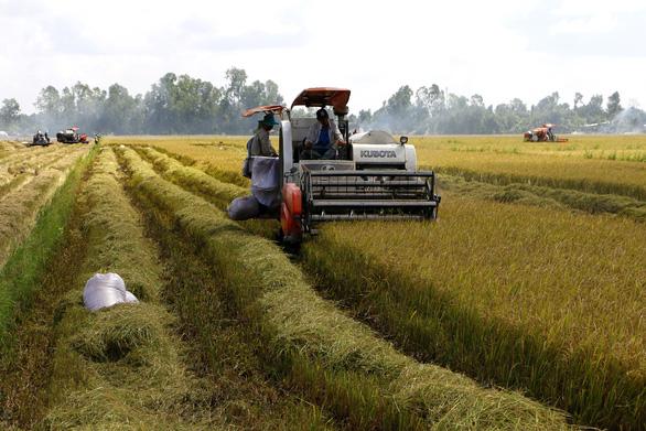 Bộ trưởng Lê Minh Hoan: Doanh nghiệp đừng chờ giá lúa xuống đáy rồi mới mua - Ảnh 2.