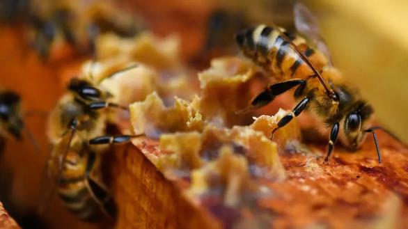 Pháp cảnh báo Mật ong Hắc Mã, kêu gọi người dân tiêu hủy - Ảnh 1.