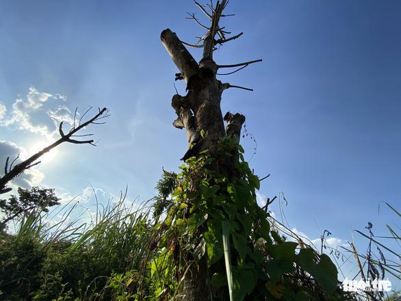 Vườn hoa mới bàn giao đã thành 'rừng rậm', công viên để hoang phế - Ảnh 5.