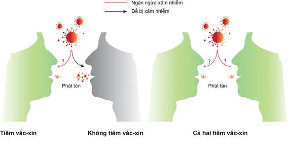 2 yếu tố quyết định khả năng giảm lây truyền virus của vắc xin COVID-19 - Ảnh 1.