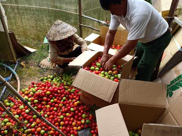 Lâm Đồng tặng 350 tấn rau củ quả cho TP.HCM và các tỉnh - Ảnh 1.