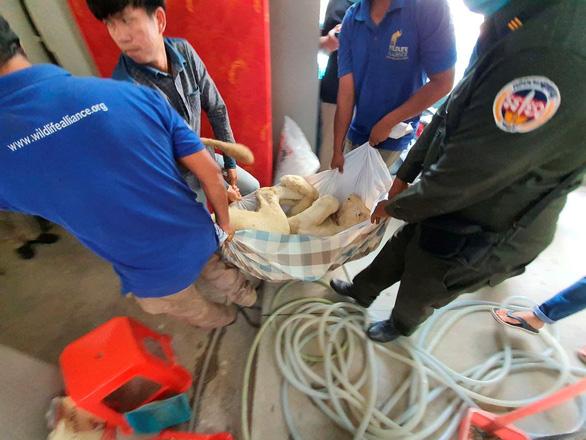 Ông Hun Sen cho phép trả sư tử cho chủ ở Phnom Penh - Ảnh 1.