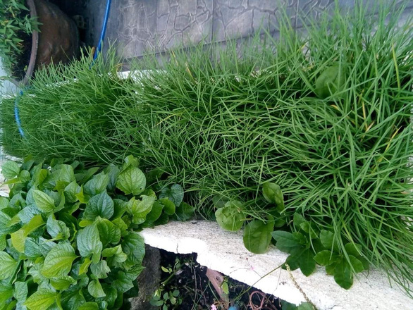 Người phố tăng gia rau xanh - Ảnh 3.