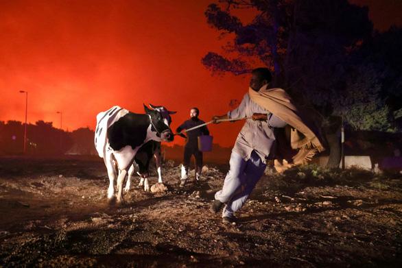 Thủ tướng Hy Lạp xin lỗi vì để cháy rừng như 'ngày tận thế' - Ảnh 4.