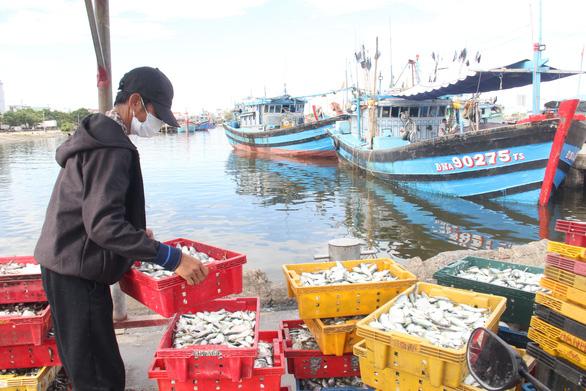 Giải quyết ra sao với tàu cá về lại vùng cách ly ở Đà Nẵng - Ảnh 1.