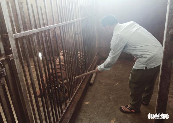 Bắt tạm giam người nuôi cả đàn hổ trái phép trong nhà - Ảnh 2.