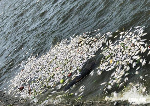 Cá chết nổi dày đặc ở hồ điều hòa lớn nhất TP Vinh - Ảnh 3.