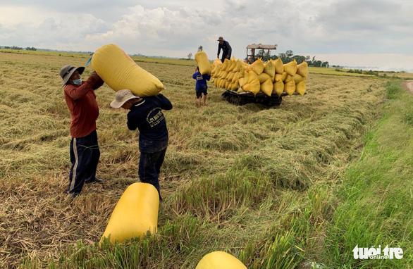 Hỏa tốc đề xuất Chính phủ yêu cầu ngân hàng cho doanh nghiệp vay vốn thu mua lúa gạo