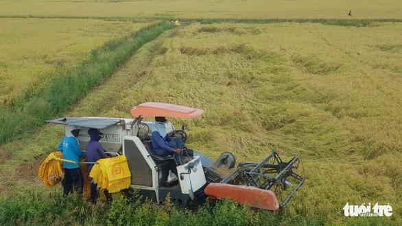 Bộ trưởng Lê Minh Hoan: Giá lúa nhích lên, bộ đang theo sát tình hình - Ảnh 1.