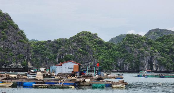 Hải Phòng muốn di dời các hộ nuôi thủy sản trên biển Cát Bà bằng dự án hỗ trợ 68 tỉ đồng - Ảnh 1.