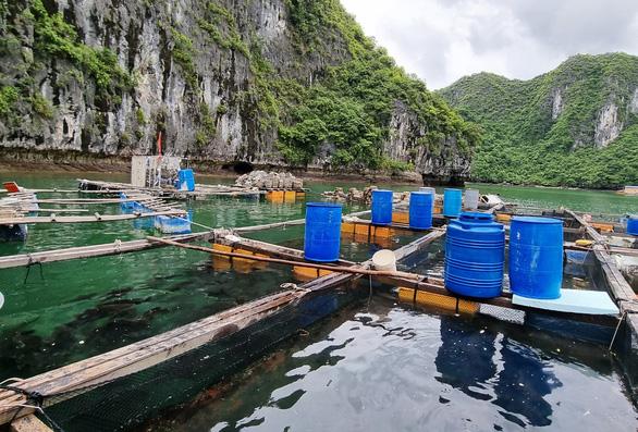 Hải Phòng muốn di dời các hộ nuôi thủy sản trên biển Cát Bà bằng dự án hỗ trợ 68 tỉ đồng - Ảnh 2.