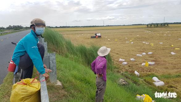 Giá lúa miền Tây đã tăng, giá tôm nơi cao chỗ thấp - Ảnh 2.