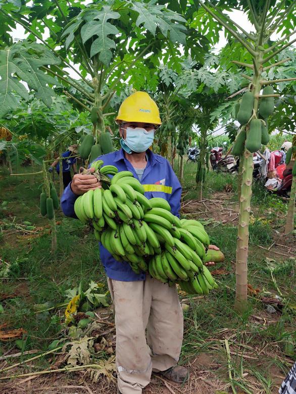 Nối tiếp Bắc Giang, nông sản từ Lào Cai, Vĩnh Phúc, Phú Thọ về tiếp sức thủ đô - Ảnh 2.
