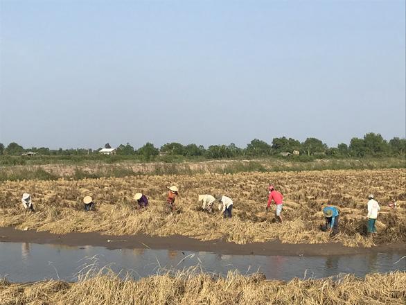 Đề xuất cứu lúa gạo miền Tây bằng luồng xanh đường thủy - Ảnh 1.