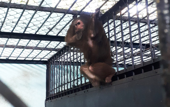 TP.HCM: Tiếp nhận, cứu hộ chim phượng hoàng đất, khỉ mặt đỏ... trong mùa dịch - Ảnh 2.