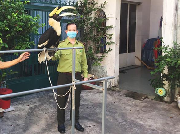 TP.HCM: Tiếp nhận, cứu hộ chim phượng hoàng đất, khỉ mặt đỏ... trong mùa dịch - Ảnh 1.