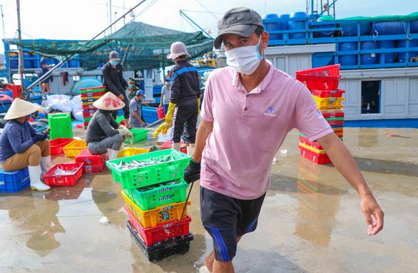Đã mắt hình ảnh ngư dân Ninh Thuận bất ngờ trúng lớn mùa cá nam - Ảnh 1.