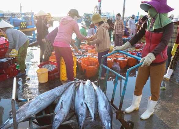 Đã mắt hình ảnh ngư dân Ninh Thuận bất ngờ trúng lớn mùa cá nam - Ảnh 3.