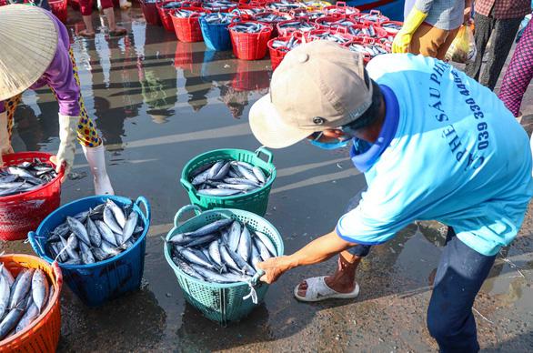 Đã mắt hình ảnh ngư dân Ninh Thuận bất ngờ trúng lớn mùa cá nam - Ảnh 7.