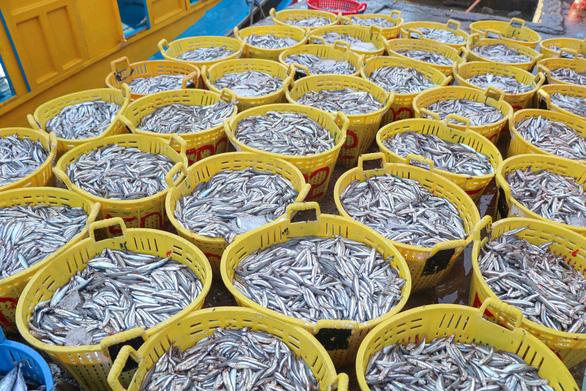 Đã mắt hình ảnh ngư dân Ninh Thuận bất ngờ trúng lớn mùa cá nam - Ảnh 5.