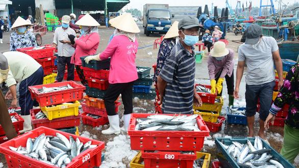 Tôm cá biển Phan Thiết rộ mùa cá nam rẻ rề mà bán không được - Ảnh 1.