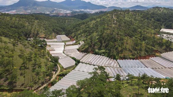 Lâm Đồng tháo dỡ 220ha nhà kính, nhà lưới lấn rừng, hoàn thành trong tháng 9-2021 - Ảnh 1.