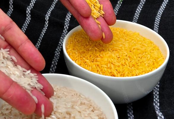 Philippines cho trồng đại trà gạo vàng biến đổi gene - Ảnh 1.