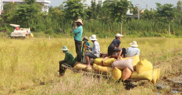 Bạc Liêu thành lập tổ điều phối, tiêu thụ nông sản, Cà Mau thu hoạch lúa trong đêm - Ảnh 1.