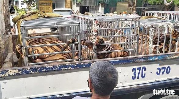 Công an tìm thấy cả chục con hổ được nuôi nhốt trong một nhà dân - Ảnh 1.