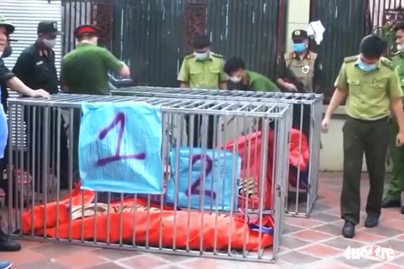 8/17 con hổ nuôi nhốt trong nhà dân Nghệ An được 'giải cứu' đã chết - Ảnh 2.