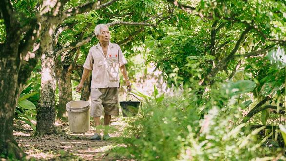 Nhãn Hưng Yên và một mùa thu hoạch thật khác - Ảnh 1.