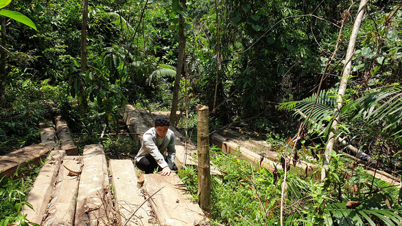 Rừng phòng hộ mất hàng trăm gốc mà chủ rừng vô can - Ảnh 2.