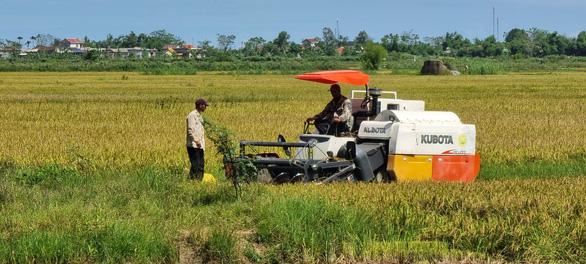 Quảng Bình test nhanh COVID-19 cho nông dân ra đồng gặt lúa, Quảng Trị gặt lúa 'non - Ảnh 2.