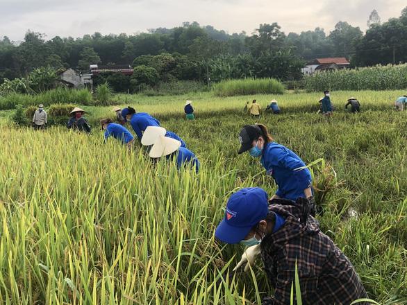 Gần 1.000 đoàn viên, thanh niên giúp dân thu hoạch lúa mùa tránh bão số 5 - Ảnh 3.