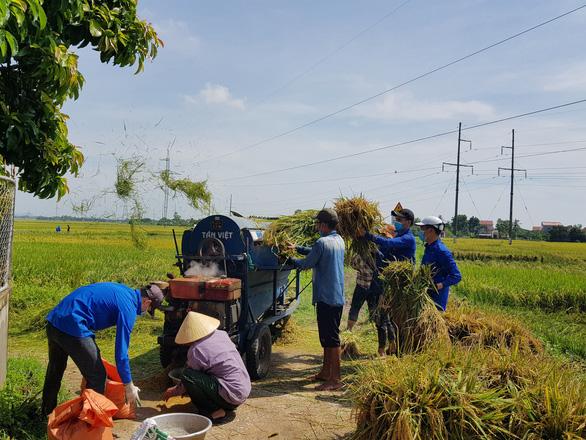 Gần 1.000 đoàn viên, thanh niên giúp dân thu hoạch lúa mùa tránh bão số 5 - Ảnh 1.