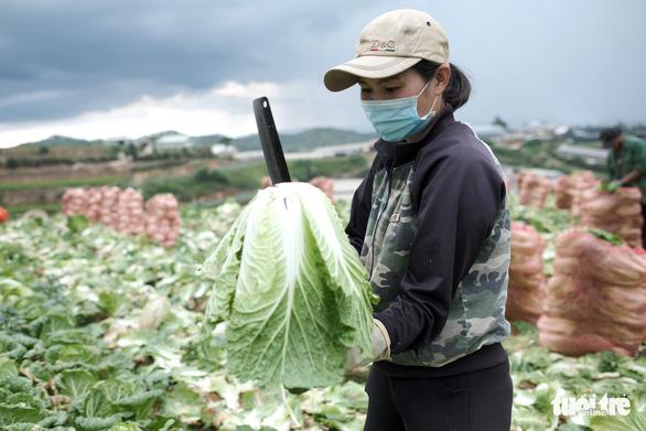 Mất mùa do mưa, Đà Lạt vẫn chuyển rau tặng TP.HCM, chở gấp đến bệnh viện - Ảnh 3.