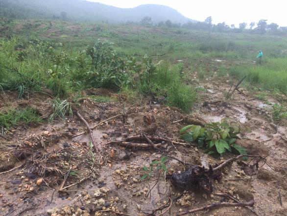 23 ha rừng phòng hộ bị phá, 6 tháng sau huyện mới phát hiện báo lên tỉnh - Ảnh 1.