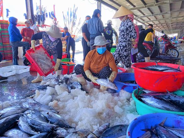 Từ 15-9, mở lại cảng Hòn Rớ, cảng cá lớn nhất Nam Trung Bộ - Ảnh 1.