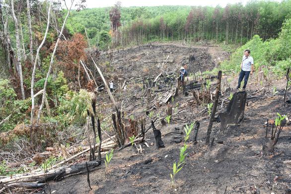 Khởi tố vụ án phá rừng phòng hộ ở Phú Yên mà báo Tuổi Trẻ phản ánh - Ảnh 1.