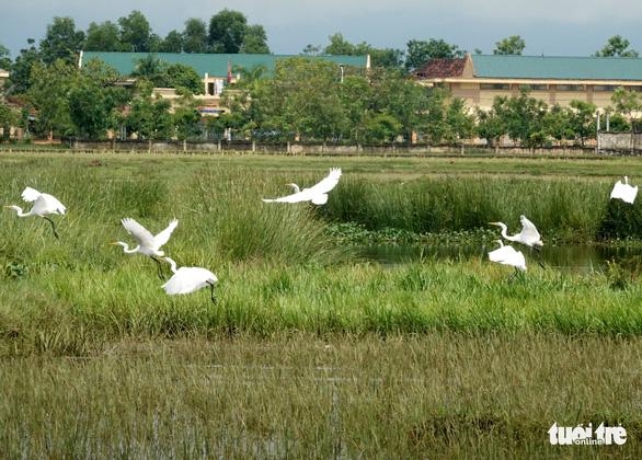 Ngăn chặn nạn săn bắt, trả lại bình yên cho đàn chim trời mùa di cư - Ảnh 1.