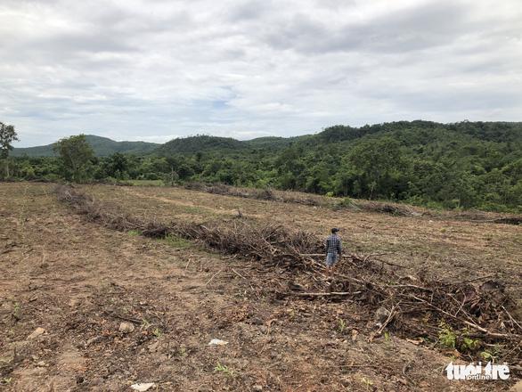 San ủi cây rừng tái sinh để... trồng keo lai - Ảnh 2.