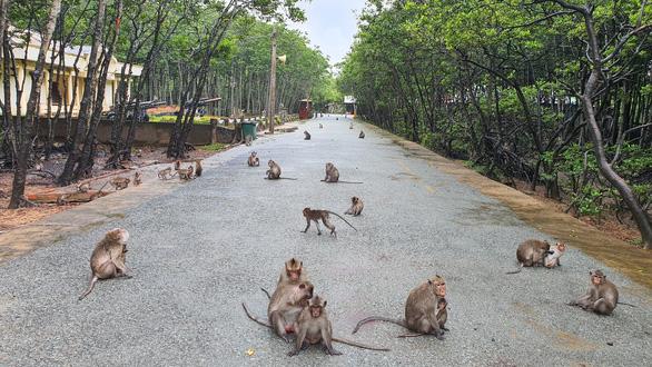 Saigontourist Group tài trợ tour tri ân lực lượng tuyến đầu phòng chống dịch - Ảnh 3.