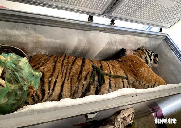 Phát hiện hổ đông lạnh nặng 160kg trong nhà dân - Ảnh 1.