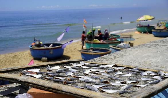 Ngư dân Phước Hải ngóng ngày mở biển - Ảnh 2.