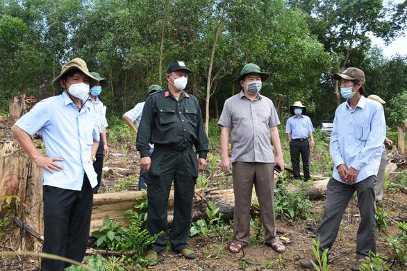 'Đốn rừng phòng hộ đầu nguồn để trồng keo': Điều tra có hay không người đứng sau - Ảnh 1.