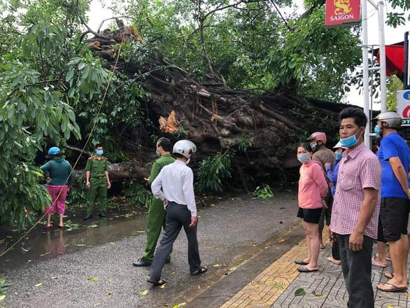 Cây đa 200 tuổi ở Quảng Ngãi bật gốc, ngã đổ đè chết người đi đường - Ảnh 1.