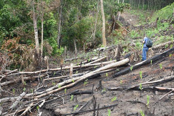 Khởi tố, bắt tạm giam 2 bị can vụ phá rừng phòng hộ ở Phú Yên - Ảnh 1.